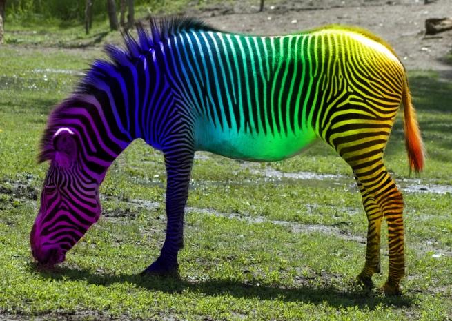 zebra necessidade de ser diferente